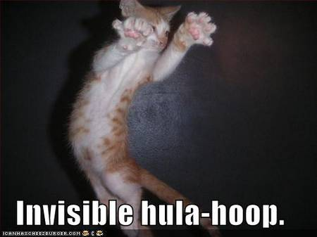 funny-pictures-invisible-hula-hoop-cat